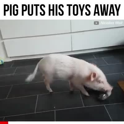 Pig puts his toys away