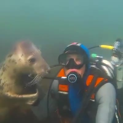 Super cute seal and so gentle. Must watch this video and realize we are all one. Tsem Rinpoche